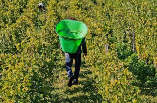 Gironde : un arrêté pour limiter l'exposition aux pesticides
