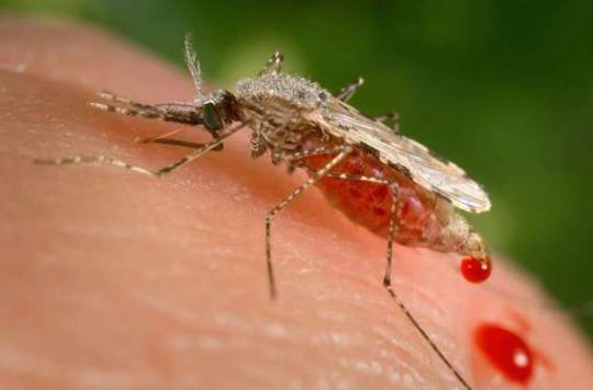 Zika : sang et sperme surveillés