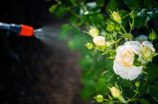 Pesticides : désormais interdits dans les parcs publics