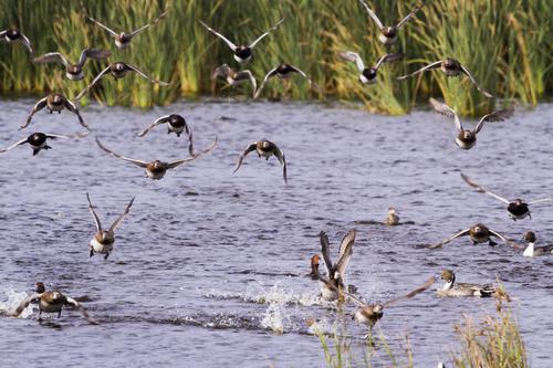 Grippe aviaire :  le vide sanitaire appliqué dans les Landes
