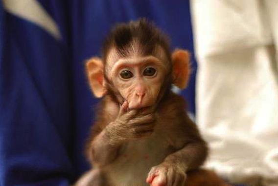 Expérimentation animale : une pétition relance le débat