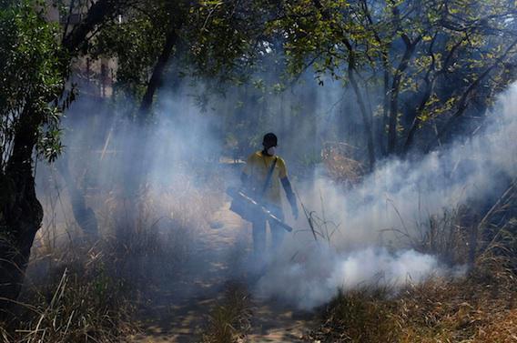 Zika : le virus qui affole la planète