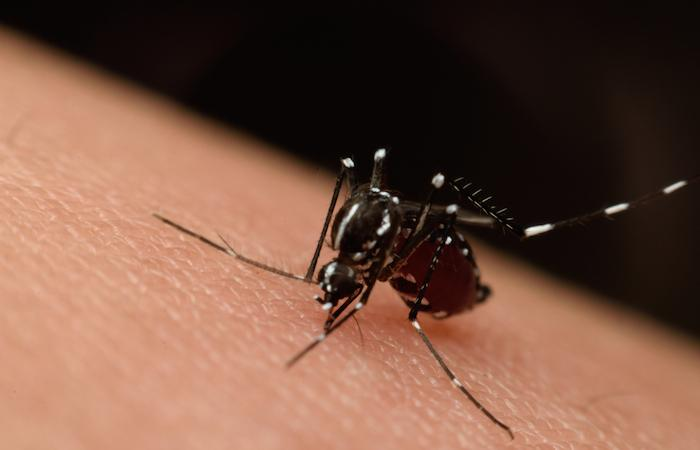 Zika : une application smartphone permet un diagnostic rapide