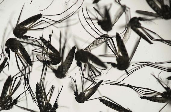 Zika : Marisol Touraine conseille aux femmes enceintes d'éviter les DOM-TOM