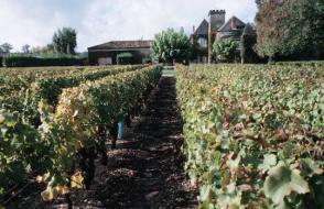 Pesticides : dans les vignes, la santé en otage