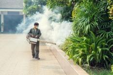 Dengue : une grippe tropicale qui peut faire saigner