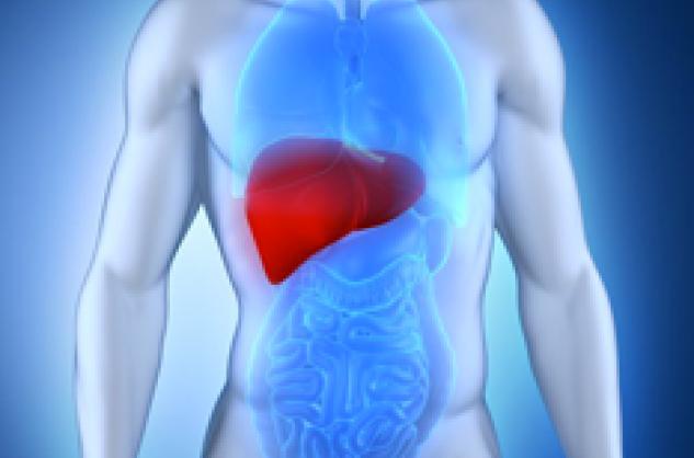 Hepatitis B: una enfermedad infecciosa del hígado relacionada con el sexo o ...