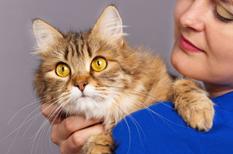 Maladie des griffes du chat : une bartonellose que l'on peut retrouver dans le